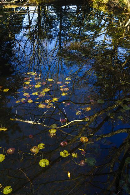 瑠璃宝の池