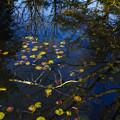 写真: 瑠璃宝の池