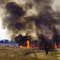 写真: 今年の葦焼き開始