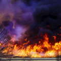 写真: 広範囲が一気に燃えます。