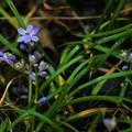 写真: 庭の花-1