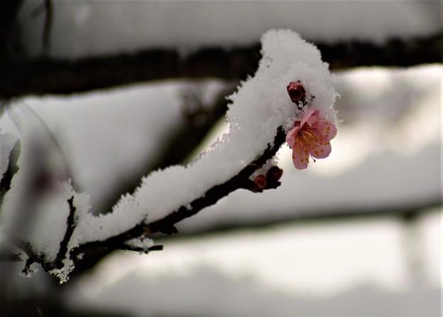 Photos: 雪が降りました-2