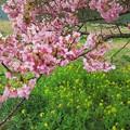 南伊豆町下賀茂温泉「みなみの桜」(2)
