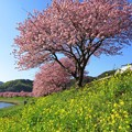 南伊豆町下賀茂温泉「みなみの桜」(10)