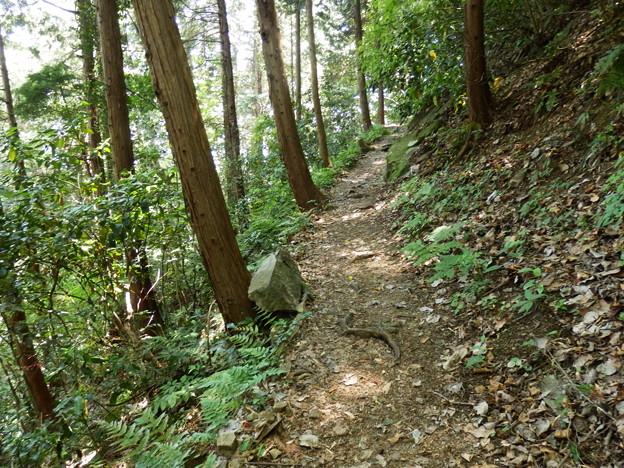 整備された登山道を登ります