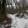 急登にさしかかり融けかかった残雪が非常に滑るため為断念