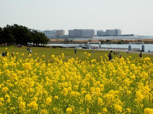 菜の花畑が綺麗っす~^^