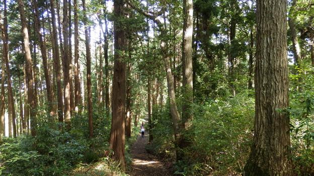 森林浴しながらお散歩いいね^^