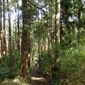 Photos: 森林浴しながらお散歩いいね^^