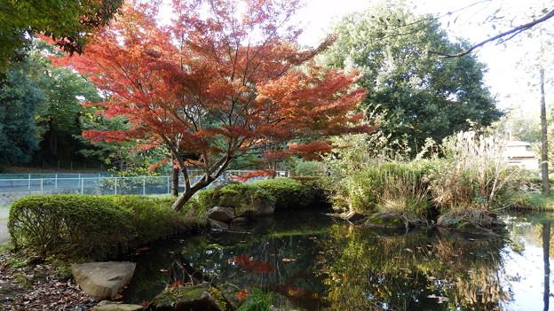 大和ふれあいの森の紅葉