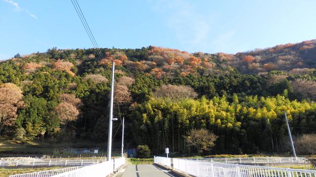 いざ!秋葉山の稜線上に登る為の斜面探し!