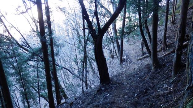 いい感じの登山道です^^