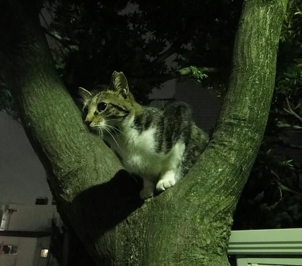 木登りニャンコ