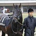 写真: 東京9R 新緑賞 レッドジョーカー