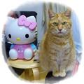 Photos: キティちゃんの加湿器と恵子