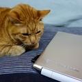 写真: 夫のパソコン