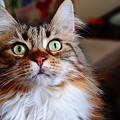 本日猫の日 2月22日
