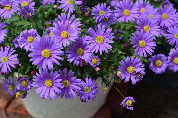 どんな不精な庭にも花咲く季節の到来です♪♪