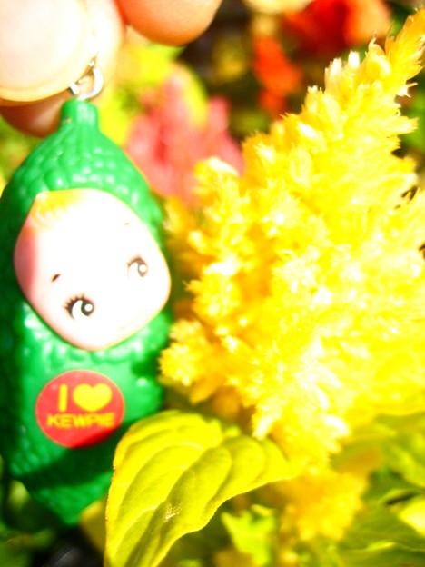 羽毛ケイトウの花1