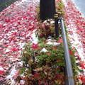 Photos: 落ち葉の上に積もった雪の上にまた落ち葉