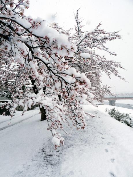 雪でしなりまくりー
