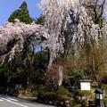 春の定勝禅寺