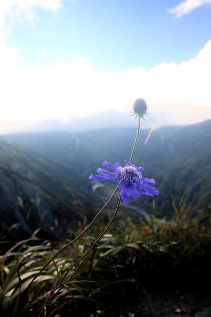 谷に咲く花
