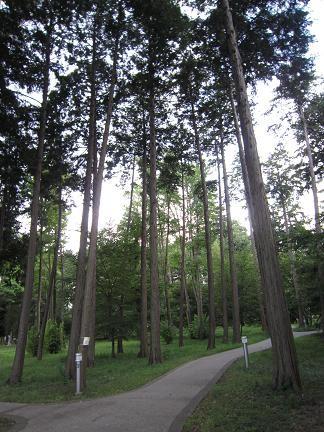 本当の名前は多摩平の森