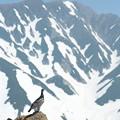 Photos: 立山の番人