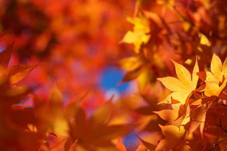 秋晴れの空に
