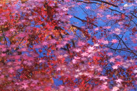 水鏡の紅葉