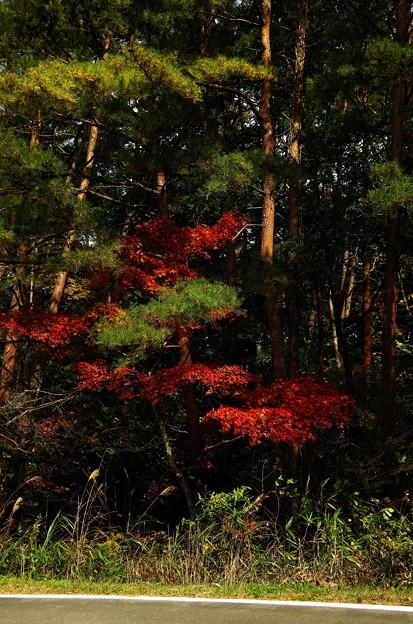 写真00173 田瀬湖周辺で