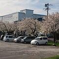 Photos: 桜2011 05 12
