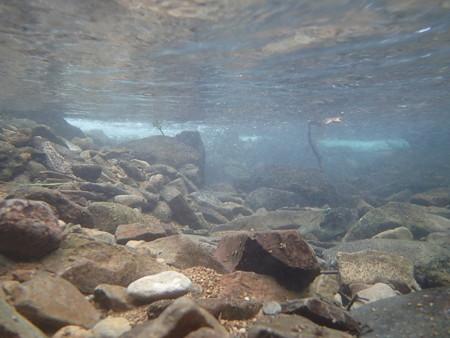 渓流の水中の様子
