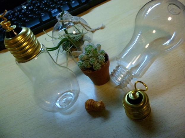 そして電球テラリウム(ボトリウム)作ろうと思ってボトルと植物買った...