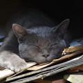 Photos: よく寝てますね。