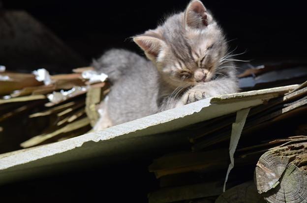 写真: 微笑む子猫ちゃん。