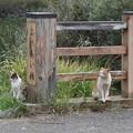 猫もふれあう~ふれあい橋