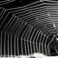 蜘蛛の巣トンネル