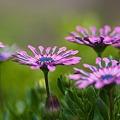 写真: 素敵に咲く