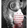 4月1日マイピクタヌコDAY♪開催