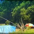 Parasol in a field