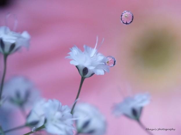 落花ちゅう~♪