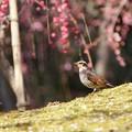 嬉しい春♪