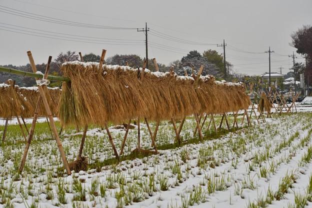 見沼田んぼ雪景色