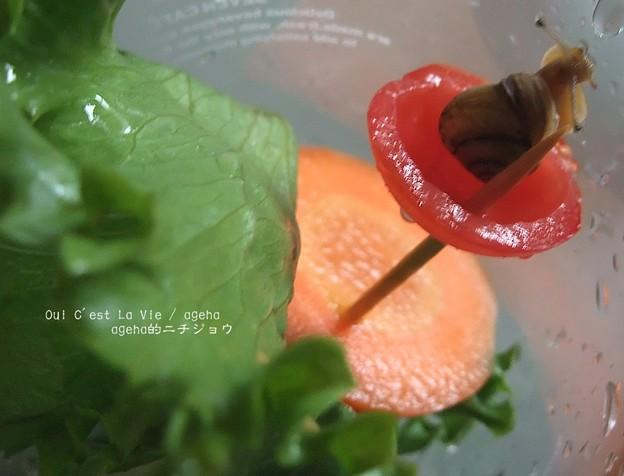 2歳のツムにトマトあげたら断固拒否。