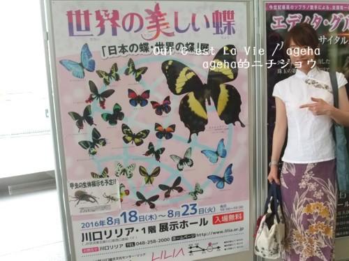 世界の蝶展at埼玉県。