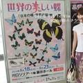 Photos: 世界の蝶展at埼玉県。