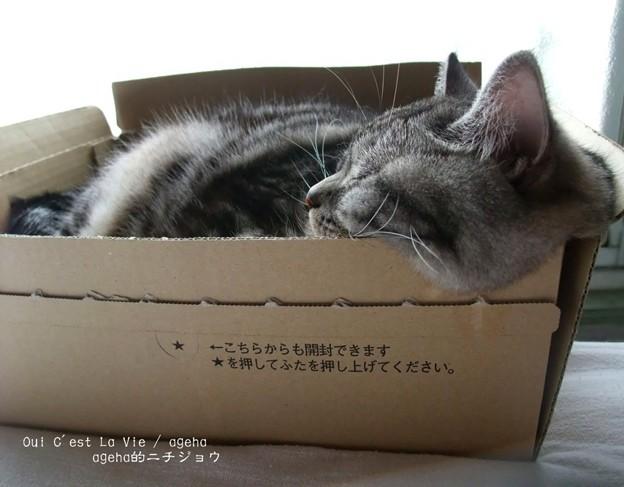 箱崩壊注意報発令。