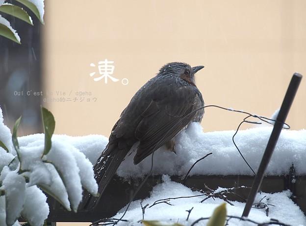 Photos: 凍えるよね~。